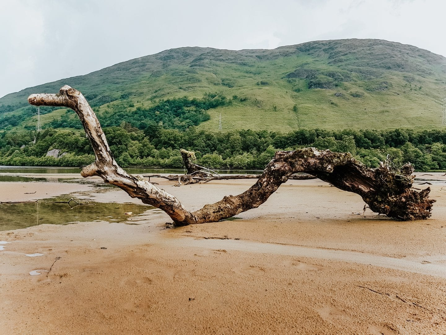 fallen tree in scottish moor