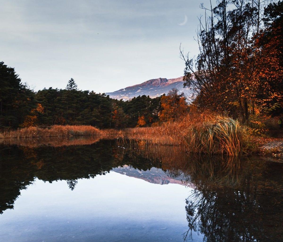 Weiher im Naturpark Pfynwald im Wallis, Schweiz
