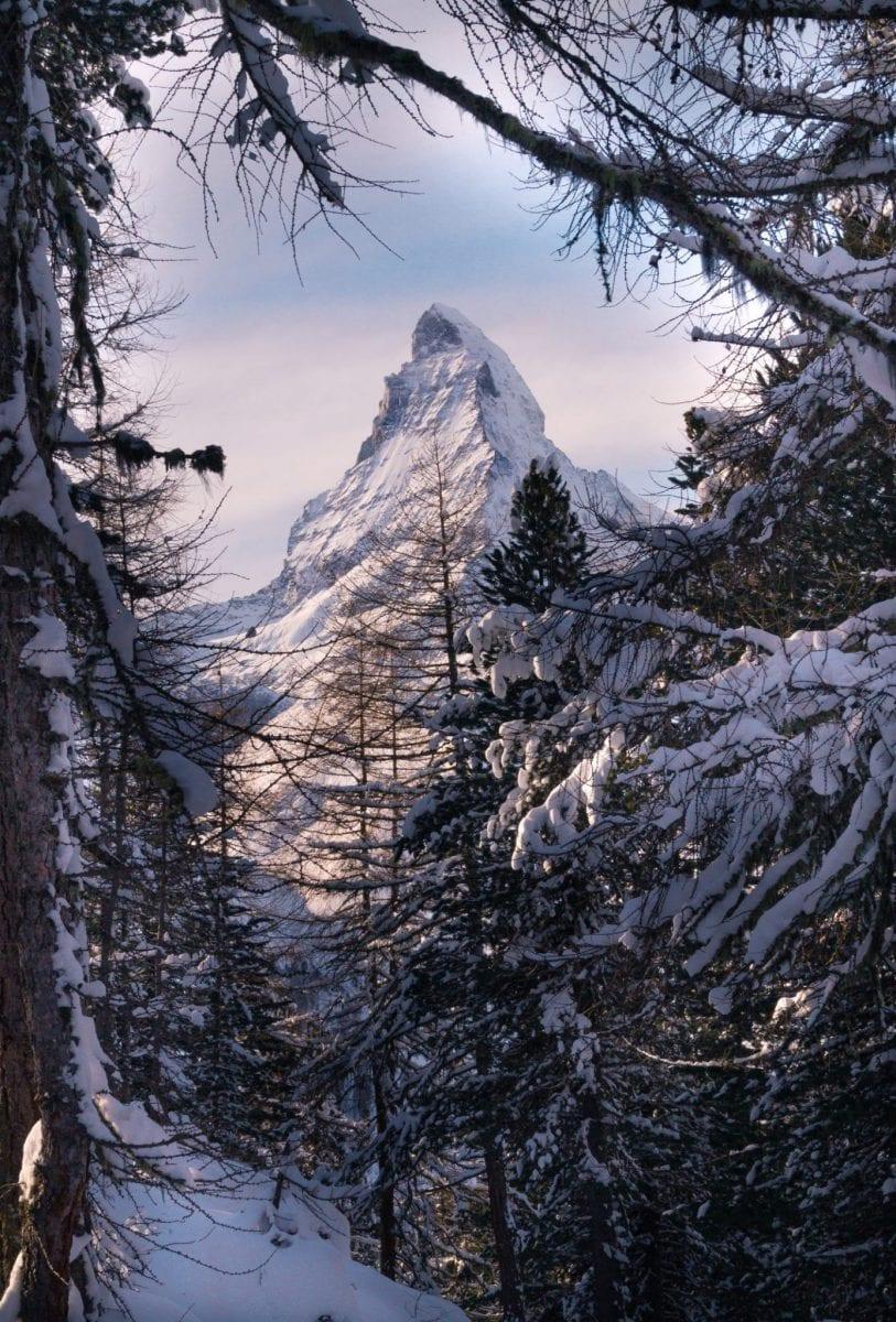 Die Spitze des Matterhorns durch schneebedeckte Bäume fotografiert.